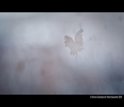 Nevin Giesbrecht Photography