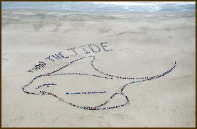 Ocean Day 2011 - bat ray