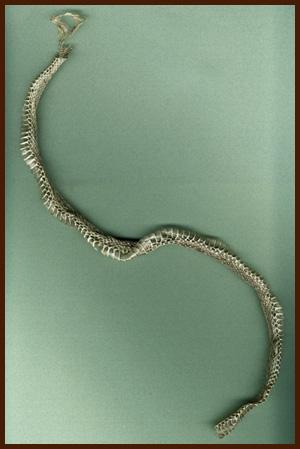 snake skin