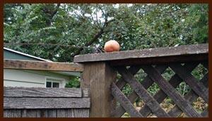 stolen apple