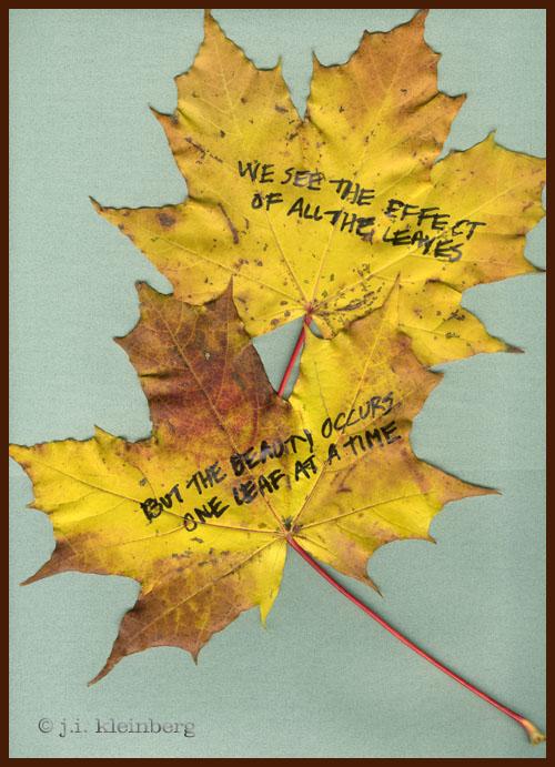 we see leaves