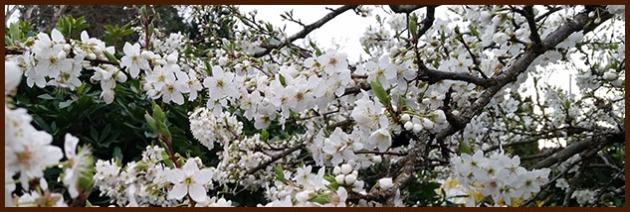 2016-03-04 plum