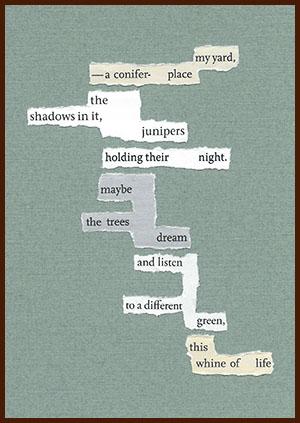 found poem © j.i. kleinberg ~ my yard